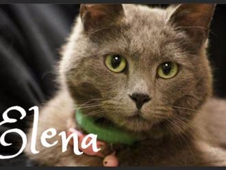 Meet Elena! FAV's Cat of the Week