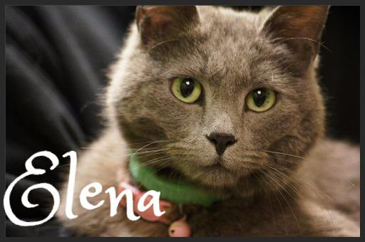 Elena_Pet ID# 34265