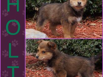 Meet Holt! FAV's Dog of the Week