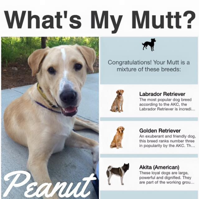 What's My Mutt is an iphone app developed by a Little Rock veterinarian!