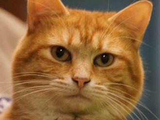 Meet Dempsey! FAV's Cat of the Week