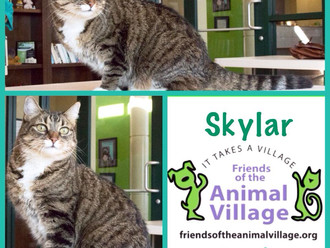 Meet Skylar! FAV's Cat of the Week