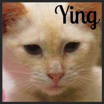 Ying (Pet ID# 35873)_Little Rock Animal Village_Friends of the Animal Village