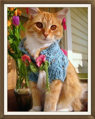 Dress Up Your Pet Day 2015_Friends of the Animal Village.jpg