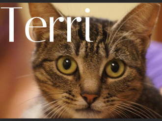 Meet Terri! FAV's Cat of the Week