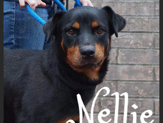 Meet Nellie! FAV's Dog of the Week
