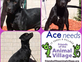 Meet Ace! FAV's Dog of the Week