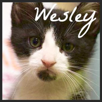wesley_edited.jpg