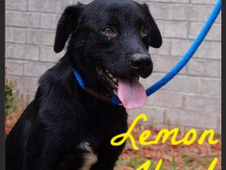 Meet Lemon Head! FAV's Dog of the Week