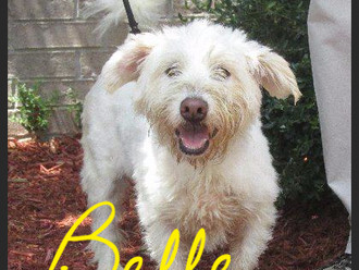 Meet Belle! FAV's Dog of the Week