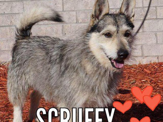 Meet Scruffy! FAV's Dog of the Week