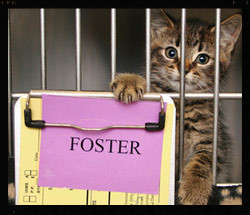 10 Reasons to Foster an Animal