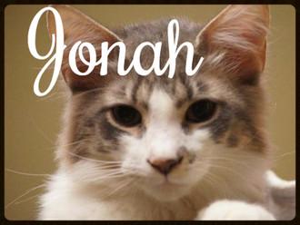 Meet Jonah! FAV's Cat of the Week