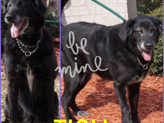 Meet Tish! FAV's Dog of the Week