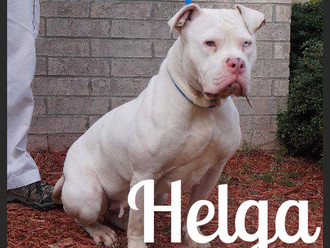 Meet Helga! FAV's Dog of the Week