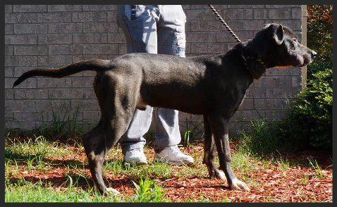 Wayne (Pet ID# 35138)_Dog of the Week_Little Rock Animal Village_Friends of the Animal Village.jpg