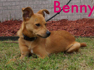 Meet Benny! FAV's Dog of the Week