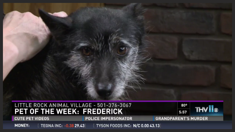 Frederick (Pet ID# 35180)_Dog of the Week_Little Rock Animal Village_Friends of the Animal Village.jpg