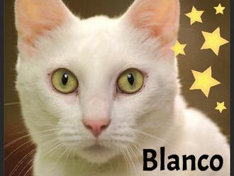 Meet Blanco! FAV's Cat of the Week