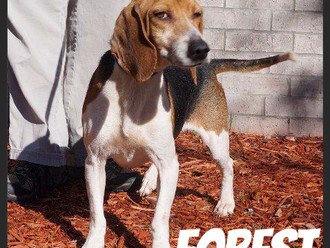 Meet Forest! FAV's Dog of the Week
