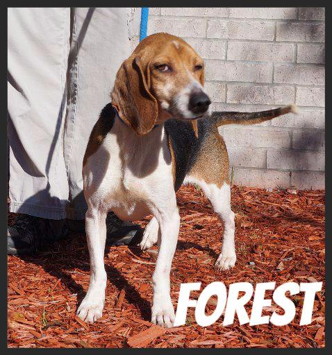 Forest (Pet ID# 37112)_Dog of the Week_Little Rock Animal Village_Friends of the Animal Village.jpg