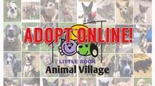 LRAV Adoptions Are Going Digital!