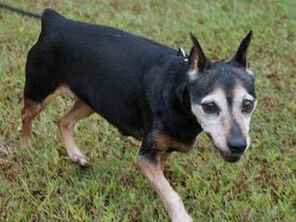 Meet Jenny! FAV's Dog of the Week