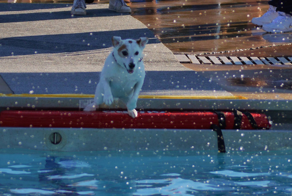 Doggie Paddle Day_Little Dog Jumping.jpg