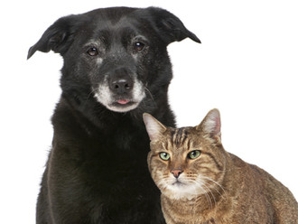 Top 10 Reasons to Adopt a Senior Pet