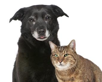 adopt a senior pet.jpg