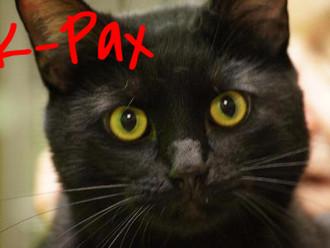 Meet K-Pax! FAV's Cat of the Week