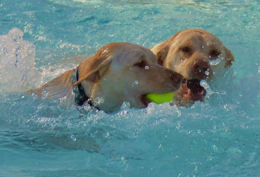 Doggie Paddle Day_Dogs Swimming_Deb Ditommaso.jpg