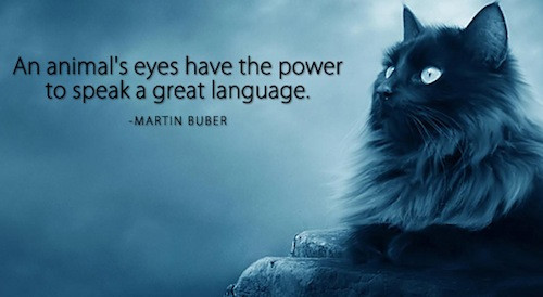 Animal Quote_Martin Buber.jpg