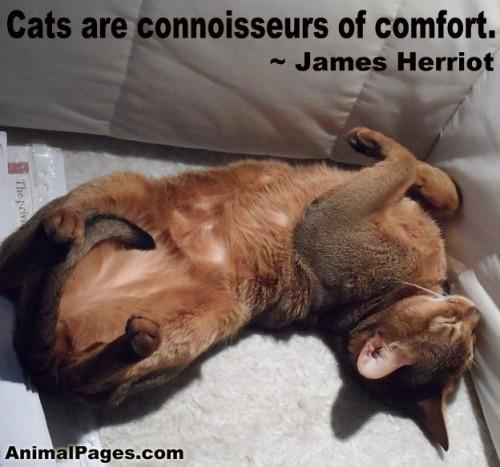 Animal Quote_James Herriot.jpg