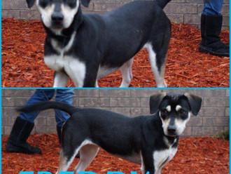 Meet Freddy! FAV's Dog of the Week