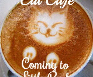 Arkansas's First Cat Café at LRAV