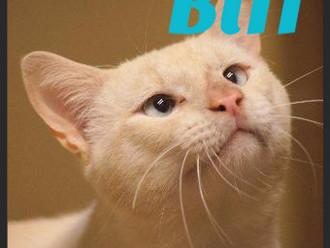 Meet Biff! FAV's Cat of the Week