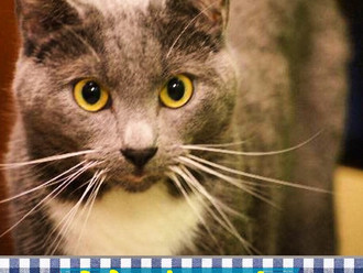 Meet Mackenzie! FAV's Cat of the Week