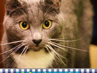 Meet Mackenzie! FAV's Cat of the Week
