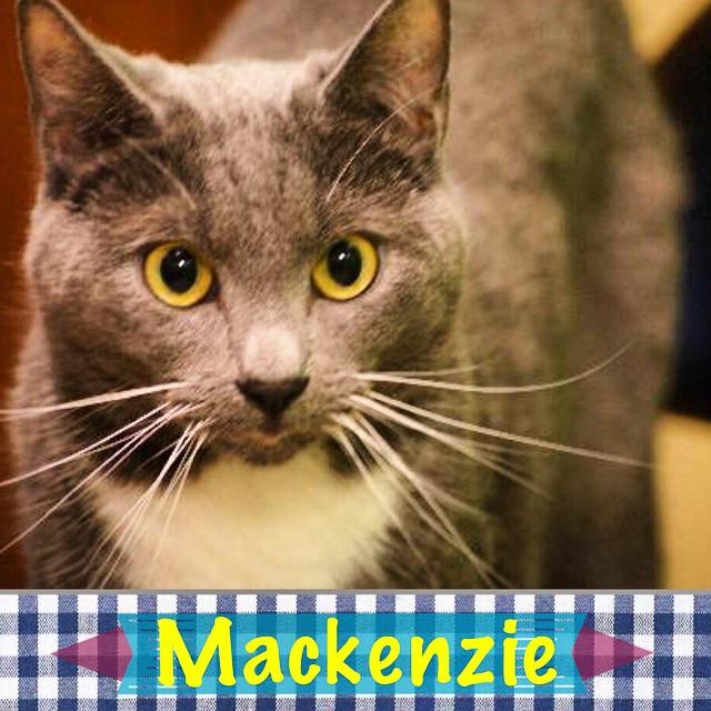 Mackenzie_Pet ID# 34505