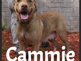 Meet Cammie! FAV's Dog of the Week