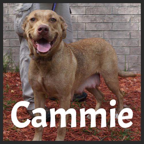 Abbie (Pet ID# 34728)_Dog of the Week_Little Rock Animal Village_Friends of the Animal Village.jpg