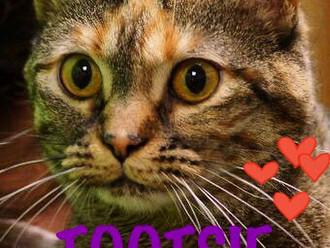 Meet Tootsie! FAV's Cat of the Week
