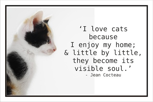 Animal Quote_Jean Cocteau.jpg