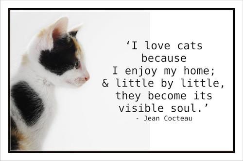 Animal Quote_Jean Cocteau.jpg