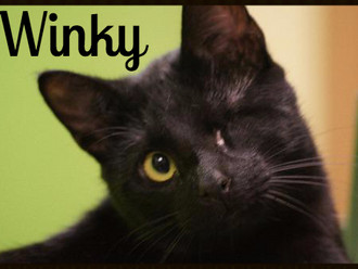 Meet Winky! FAV's Cat of the Week