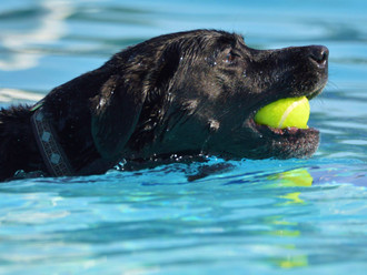 4th Annual Doggie Paddle Day