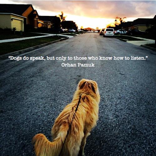 Animal Quote_Orhan Pamuk.png