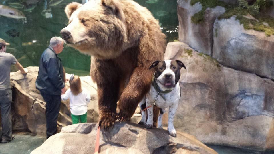 Bass Pro Shops_Dog Days_Friends of the Animal Village_Little Rock Animal Village