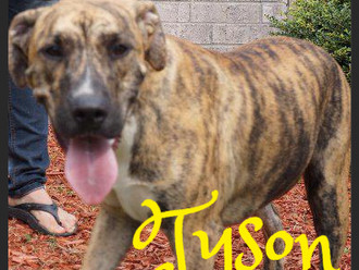 Meet Tyson! FAV's Dog of the Week